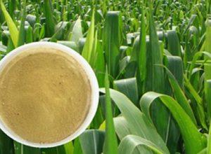 Global Chelate Fertilizer Market Analysis, Size, Growth, Study & Forecast 2019-2025: BASF SE, Akzo Nobel N.V., Syngenta AG, Nufarm Limited, Haifa Chemicals Ltd.